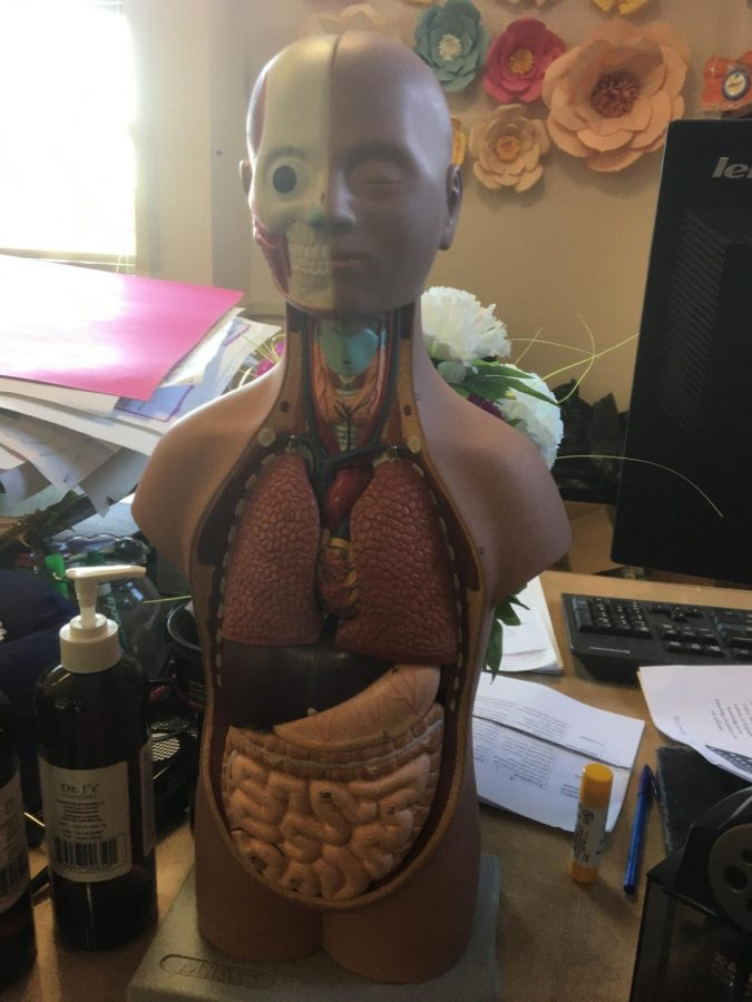 This model is used by teacher Rene Silva in his health classes.